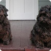 Adopt A Pet :: Sammy - Bucks County, PA