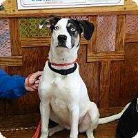 Adopt A Pet :: Daisy - Ashtabula, OH