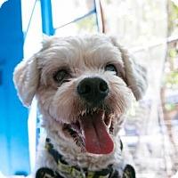 Adopt A Pet :: Lamar - San Francisco, CA
