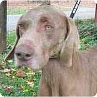 Adopt A Pet :: Allen - Eustis, FL