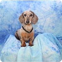 Adopt A Pet :: Miles - Ft. Myers, FL