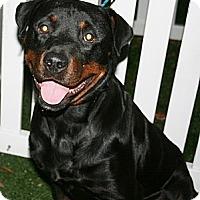 Adopt A Pet :: JD - Seffner, FL