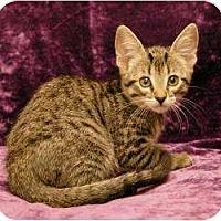 Adopt A Pet :: Megan - Sacramento, CA