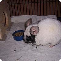 Adopt A Pet :: Sneaux & Bimini - Avondale, LA