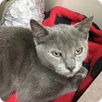 Adopt A Pet :: Jill - East Meadow, NY