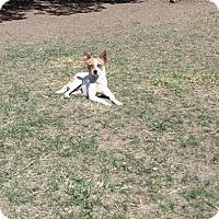 Adopt A Pet :: Della - Ft. Collins, CO