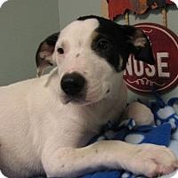 Adopt A Pet :: Baber - Groton, MA