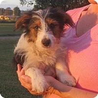 Adopt A Pet :: Raymond - Westport, CT