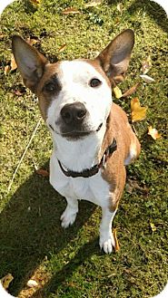 Beagle Mix Dog for adoption in Sharon Center, Ohio - Crispin