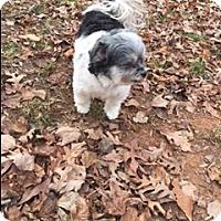 Adopt A Pet :: Peyton - Monroe, NC
