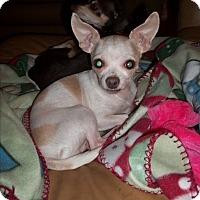 Adopt A Pet :: Bambi - Rockford, IL