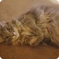 Adopt A Pet :: Kovu - Houston, TX
