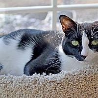 Adopt A Pet :: Limerick - Youngsville, NC