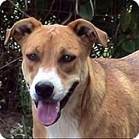 Adopt A Pet :: AA-Porter - Tyler, TX