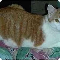 Adopt A Pet :: Fred - New Port Richey, FL
