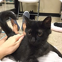 Adopt A Pet :: Mike - Colmar, PA