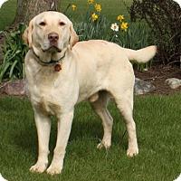 Adopt A Pet :: Jaxson - Lewisville, IN