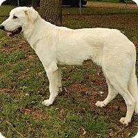 Adopt A Pet :: Tazz  *Adopted - Tulsa, OK