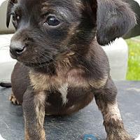 Adopt A Pet :: Alan - Burlington, VT
