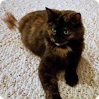 Adopt A Pet :: 'Luna' Shy & Pretty Young Adult - HILLSBORO, OR