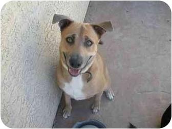 German Shepherd Dog Mix Dog for adoption in Scottsdale, Arizona - Warner