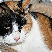 Calico Cat for adoption in Ephrata, Pennsylvania - Jewels
