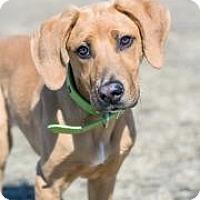 Adopt A Pet :: Bella - Cheyenne, WY