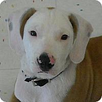 Adopt A Pet :: Houston - Beaumont, TX