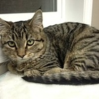 Adopt A Pet :: Sweetie - Creston, BC