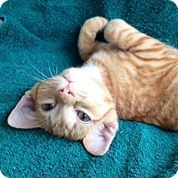 Adopt A Pet :: Thor - Pittstown, NJ