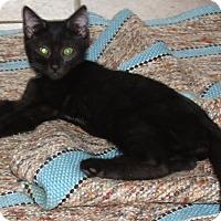 Adopt A Pet :: LYNN - Acme, PA