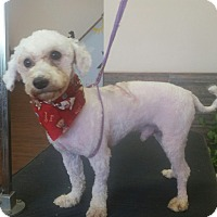 Adopt A Pet :: Oliver - Garwood, NJ