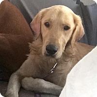 Adopt A Pet :: Franklin - Long Beach, CA
