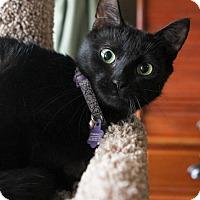 Adopt A Pet :: Violet - Atlantic, NC