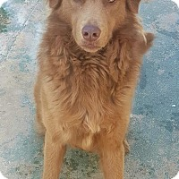 Adopt A Pet :: Reece Cup - Staley, NC