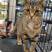 Adopt A Pet :: Wilma-ADOPTED - Livonia, MI