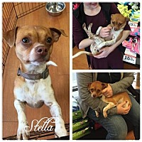 Adopt A Pet :: Stella - Hope, BC