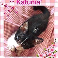 Adopt A Pet :: Katunia - Sharon Center, OH