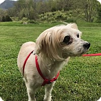 Adopt A Pet :: Flower: Gentle girl! (VA) - Spring City, TN