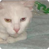 Adopt A Pet :: Fiona - lake elsinore, CA