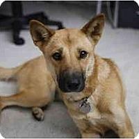 Adopt A Pet :: Kona - Southern California, CA
