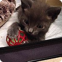 Adopt A Pet :: Rafa - Santa Monica, CA