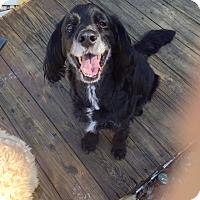 Adopt A Pet :: Lucky-Courtesy Posting - Kannapolis, NC