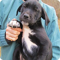 Adopt A Pet :: SUTTER - Lincolndale, NY