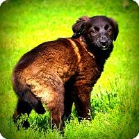 Adopt A Pet :: Addie~adopted! - Glastonbury, CT