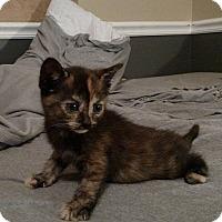 Adopt A Pet :: McGee - Tampa, FL