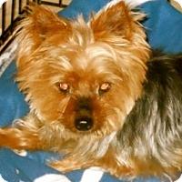 Adopt A Pet :: Abby - LE MESA, CA