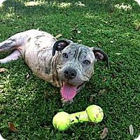 Adopt A Pet :: Peggy - Dundee, FL