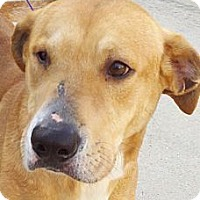 Adopt A Pet :: Rocky - Kingwood, TX