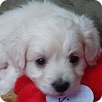 Adopt A Pet :: Kipper - La Costa, CA
